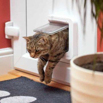 A cat coming in the door